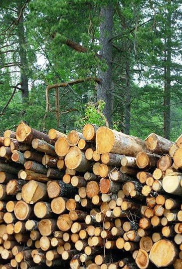 Forestry_SWS