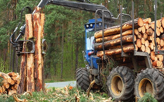 Forestry Grants | Forestry Scheme Management & Services